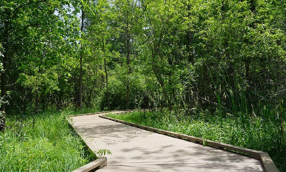 Huff Park boardwalk