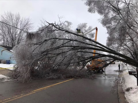 Photo of downed tree in road during February 2019 ice storms